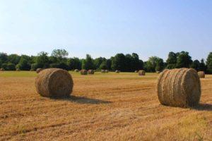 Elizabethtown-Kitley Hay Field
